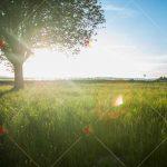 تصویر با کیفیت دشت nature high quality images