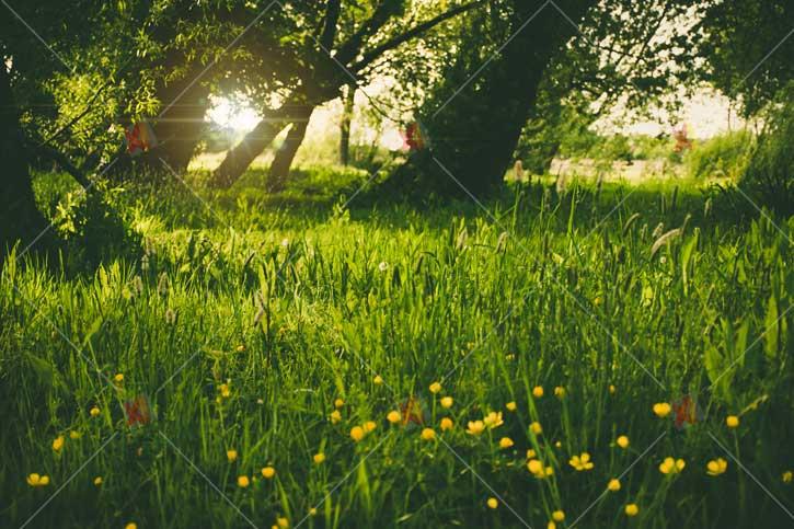 تصویر با کیفیت طبیعت nature images wallpapers