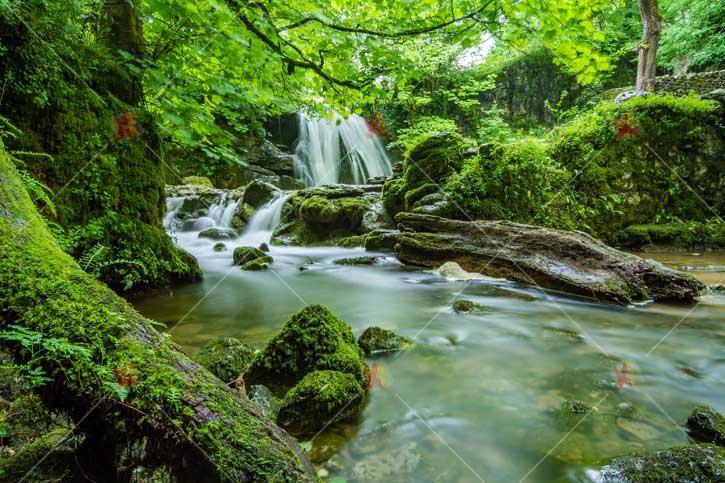 منظره با کیفیت رودخانه و جنگلhigh quality picture Natural River Jungle