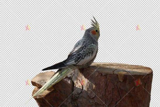 تصویر با کیفیت دور بری شده پرنده