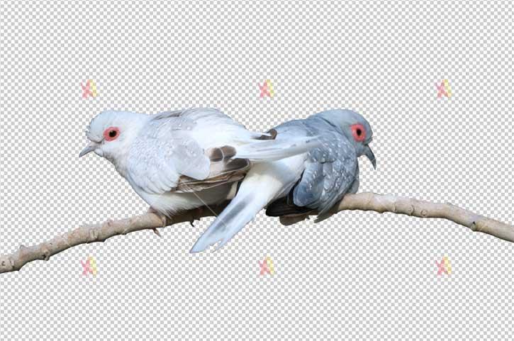 تصویر با کیفیت پرندگان به صورت دوربری