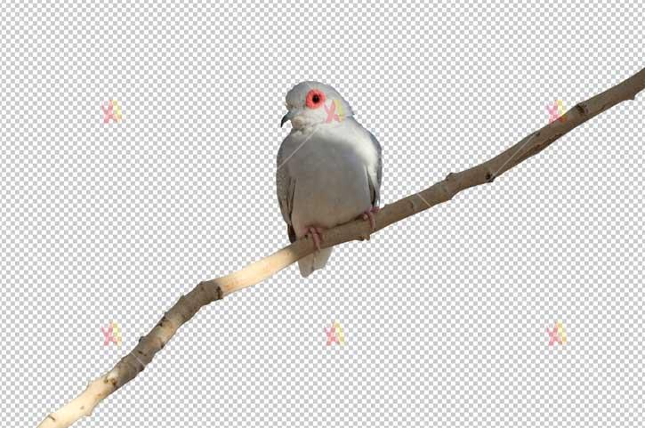 تصویر با کیفیت دوربری شده پرنده روی شاخه bird on tree